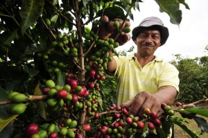 Coffee farmer in Colombia